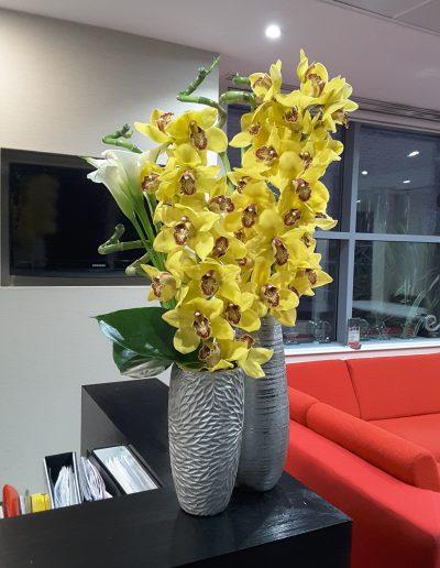 Contract Flowers - Cymbidium