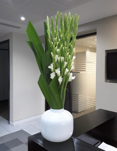 Contract Flowers - Gladiolus