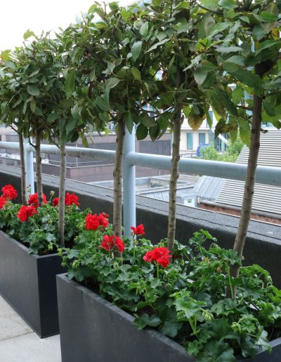 Contract Flowers - Terrace Plants